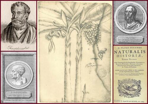 Ókor: Theophrasztosz, Cato, Plinius