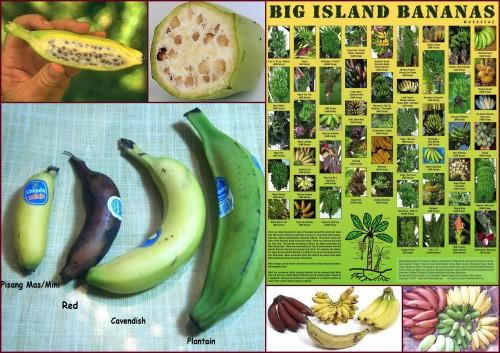 Banánfajták