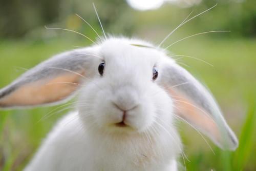 cute-bunnies-12__605