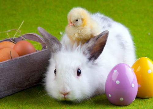 Do-not-buy-Bunnies-or-Chicks-this-Easter