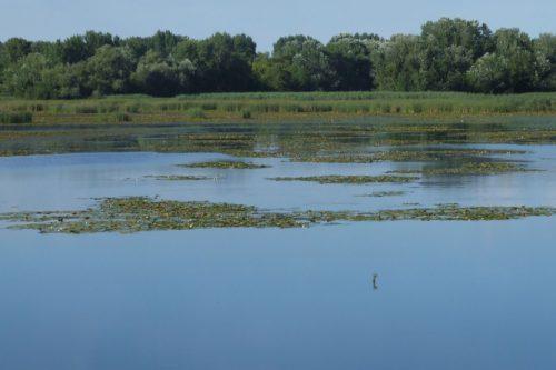 tisza tó 6