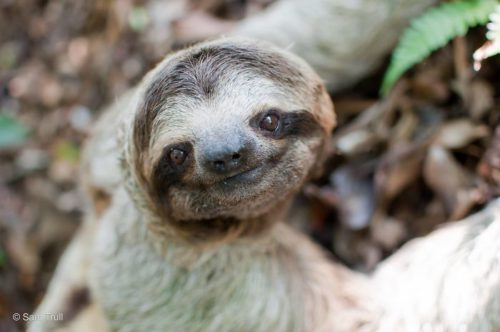 cute-sloths-5806303529cd8__700